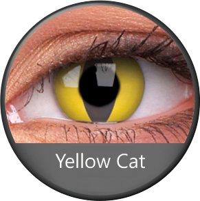 Phantasee Yellow Cat