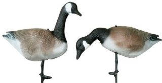 Hunter Canada Goose