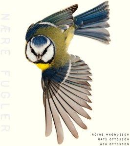 Nære fugler