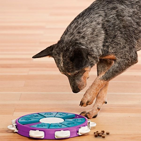 Nina Ottosson Dog Twister