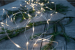 Star Trading Dew Drop LED lysslynge  10m