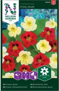 Nelson Garden Blomkarse Crazy Jewel (93842)