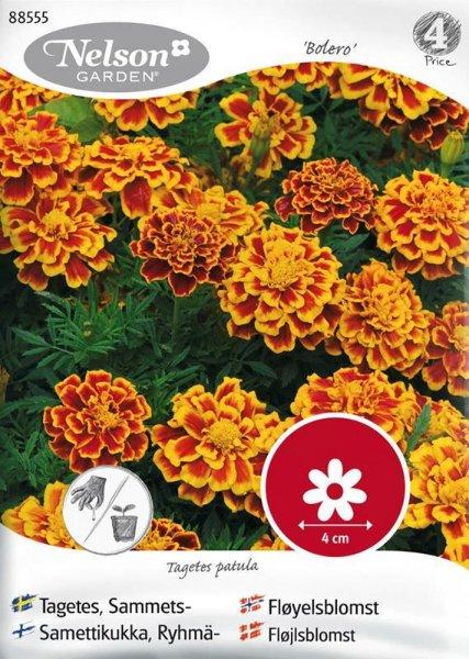 Nelson Garden Fløyelsblomst Bolero (88555)