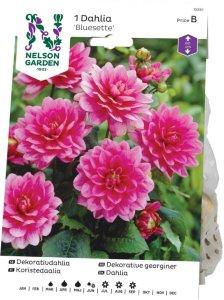 Nelson Garden Georgine Bluesette (72330)