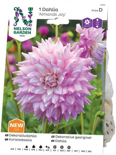 Nelson Garden Georgine Almands Joy (72302)