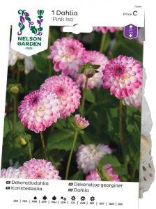 Nelson Garden Georgine Pink Isa (72444)