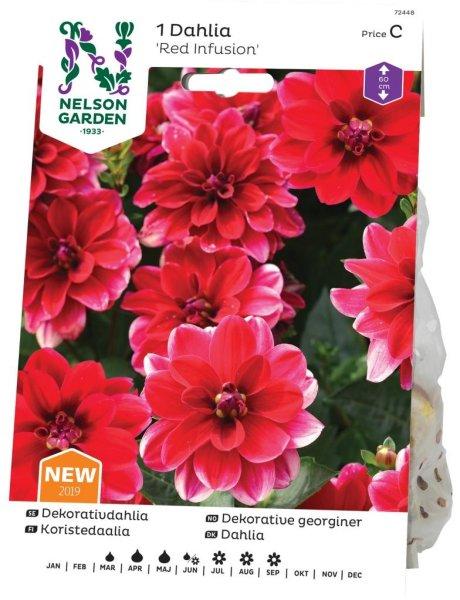 Nelson Garden Georgine Red Infusion (72448)