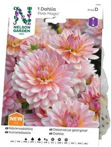 Nelson Garden Georgine Pink Magic (72640)