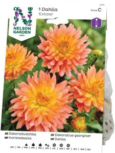 Nelson Garden Georgine Extase (72375)