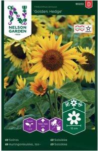 Nelson Garden Solsikke Golden Hedge (95252)