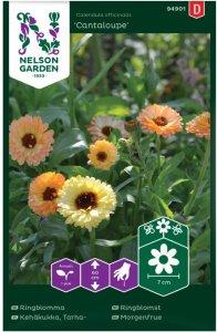 Nelson Garden Ringblomst Cantaloupe (94901)