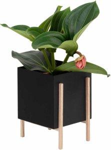 Botanic Pot