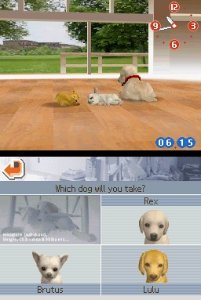Nintendogs: Chihuahua & Friends til DS