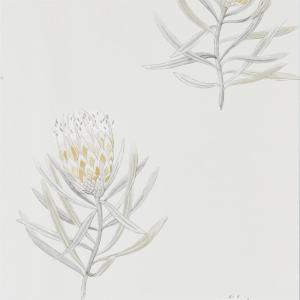 Sanderson Protea Flower - 216328