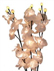 Diodkvist orkidé