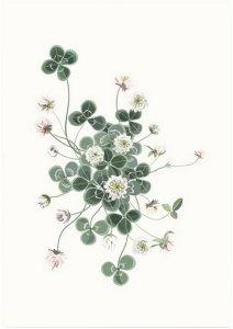 Kortkartellet Poster Lucky Clover 50x70 Unisex Grønn