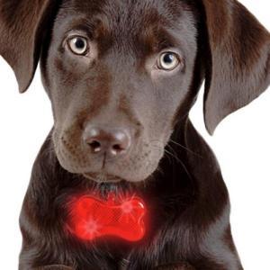 Hundebrikke med LEDlys