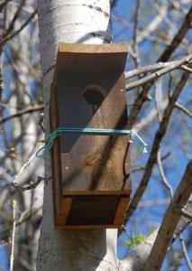 Fuglekasse stær 50 mm hullåpning, tremateriale