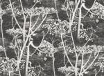 Cole & Son COW PARSLEY - 66/7046